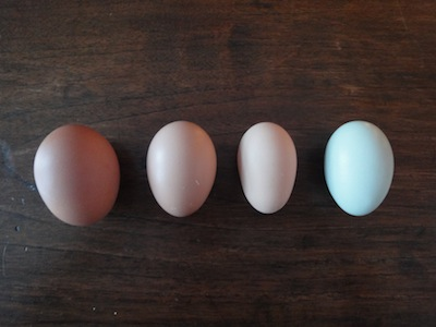 I love they way they're all different and not like grocery store eggs.